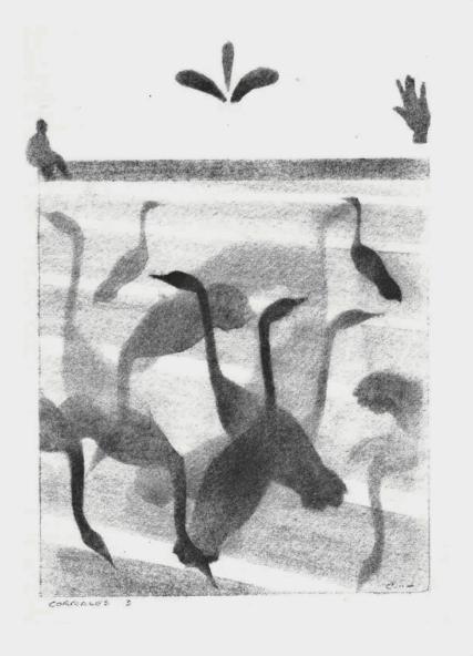 Corrales- Cranes 2